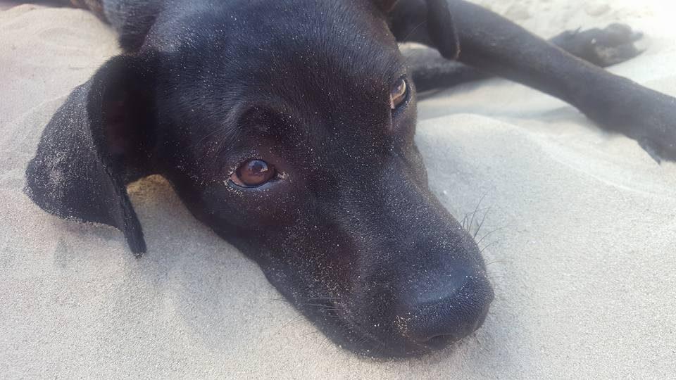 Spiagge per cani prima parte il blog porta consiglio - Bagno wanda cesenatico ...