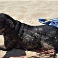 La nostra amica Atena si gode il sole in spiaggia