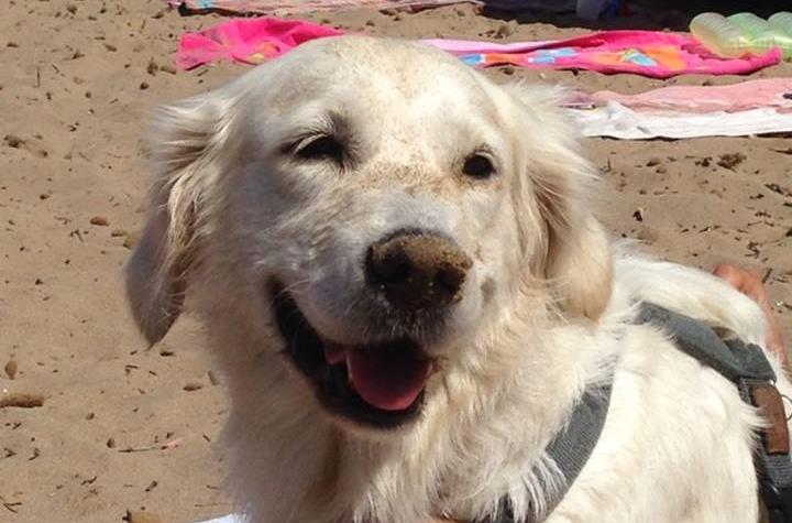 Spiagge per cani – Seconda parte