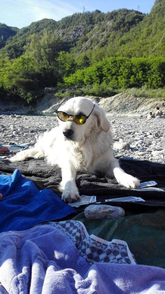Eva Si gode il Sole con stile in spiaggia per cani