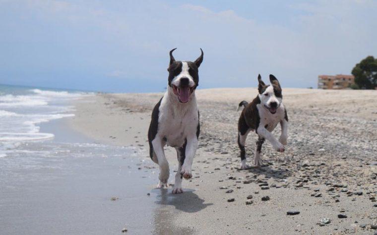 Spiagge per cani – Terza e ultima parte