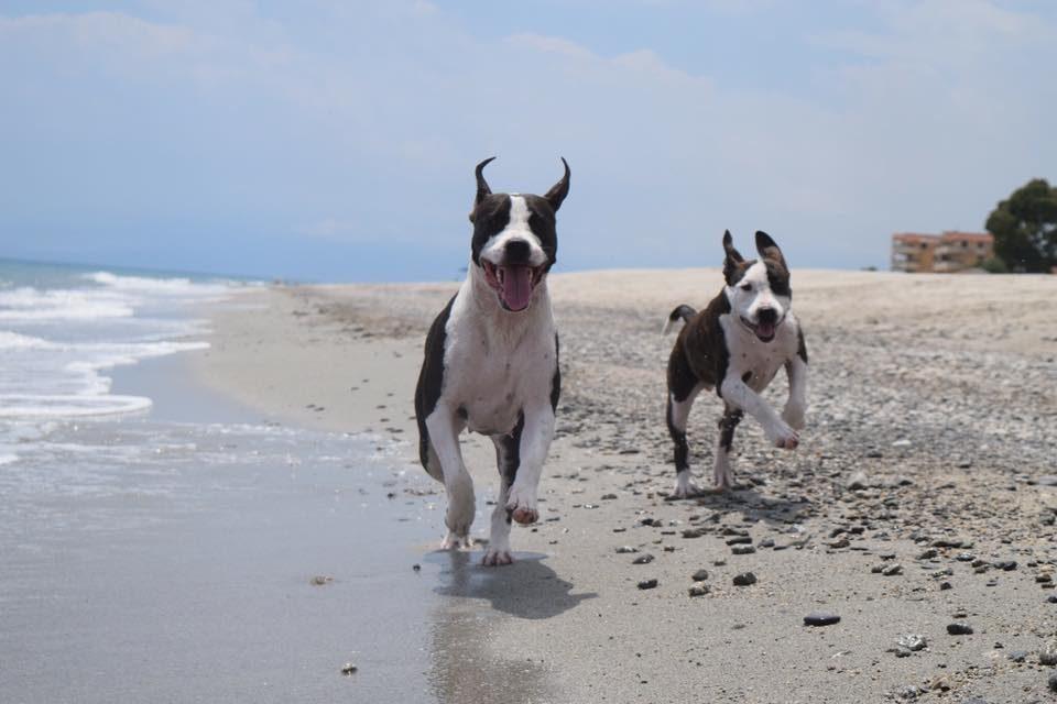 Noi siamo Apache e Maya Spiagge per cani